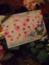 春爛漫「蝶と桜」ポストカード