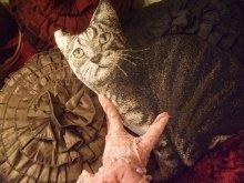 他の写真を見る3: 再入荷★Kitty Corner Pillow Shaped Cat