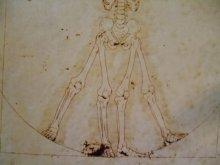 他の写真を見る2: 【再入荷】「ウィトルウィルス的骨格図」Arata Nakajima ポストカード