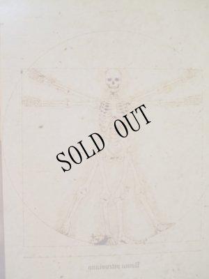 画像1: 【再入荷】「ウィトルウィルス的骨格図」Arata Nakajima ポストカード