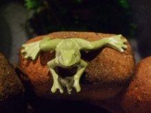 他の写真を見る1: 蛙のちいさな置物・グリーン ムーブ・フロッグ