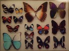 他の写真を見る2: 再入荷◆架空壁面装飾『蝶の標本』