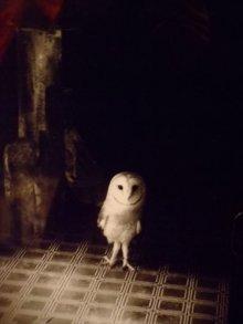 他の写真を見る2: 「Pretty spook」 A4額写真