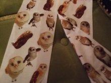 他の写真を見る1: Apple Owls タイツ  ホーちゃんとしーちゃん メンフクロウ