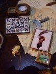 画像5: 【再入荷】◆架空壁面装飾『蝶の標本II』 (5)