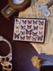 画像3: 【再入荷】◆架空壁面装飾『蝶の標本II』 (3)